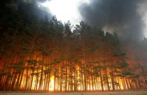 73d2c_Forest_fire_01